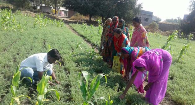 Solapur farmers turn lives around with crop diversification