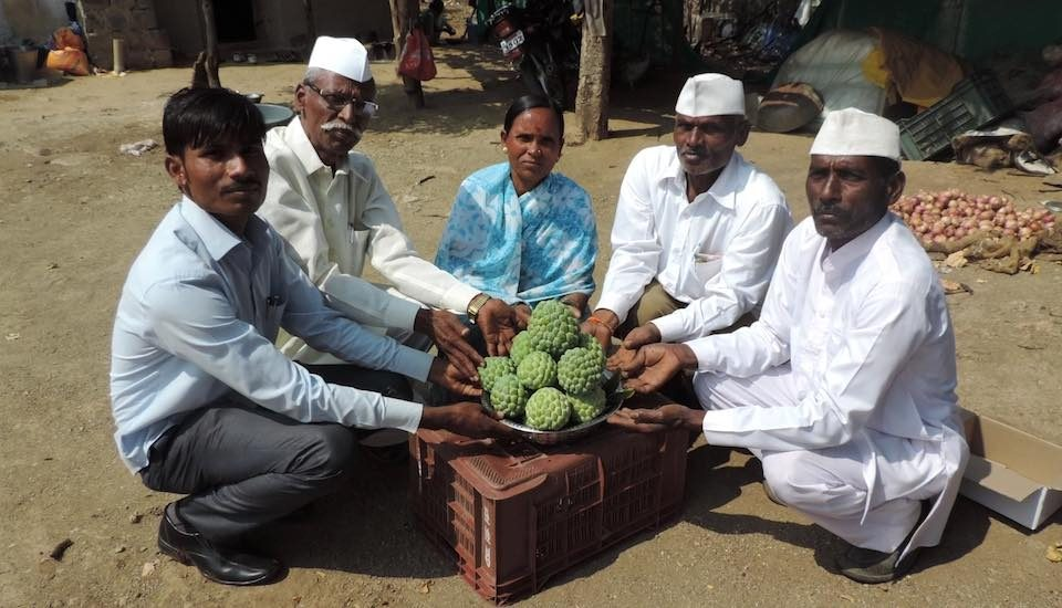 Farmers in Pimpari Dumala, with a sample of the custard apple they harvested. (Photo by Hiren Kumar Bose)