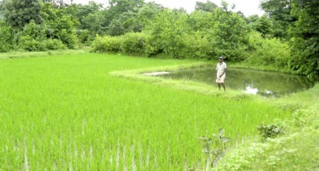 The 5% model of farm irrigation helps save the summer rice crop from dry spells.