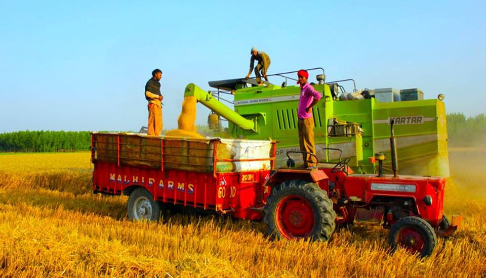 The use of harvester-cum-thresher machines has led to stubble burning in farms, which has worsened the problem of air pollution in India. (Photo by Vivian Fernandes)