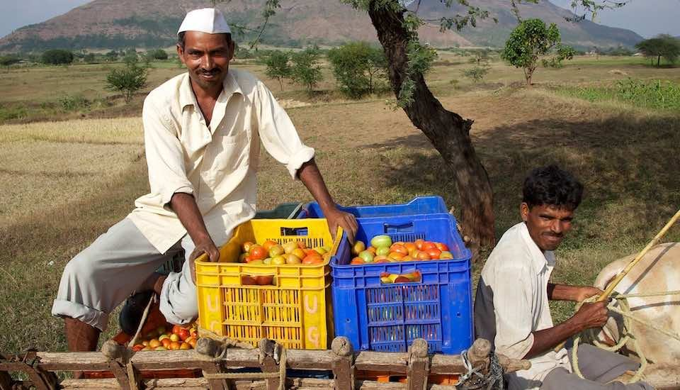 Farmers near Nashik in Maharashtra on their way to the market with their tomato harvest. (Photo by Michael Foley)