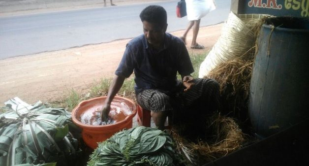 Trader Aghilesh packing betel leaves to send to new markets. Photo credit: K. Rajendran
