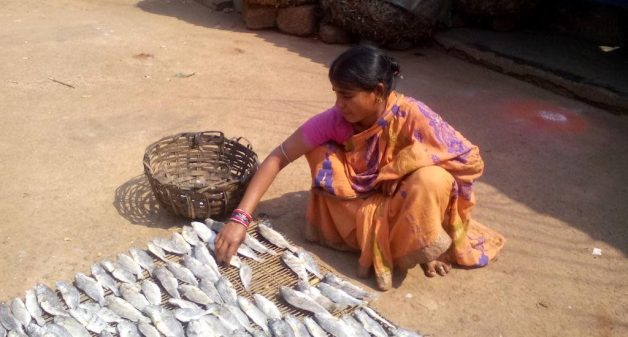 Juvenile fish have a good demand as fresh and dried fish. (Photo by Rakhi Ghosh)