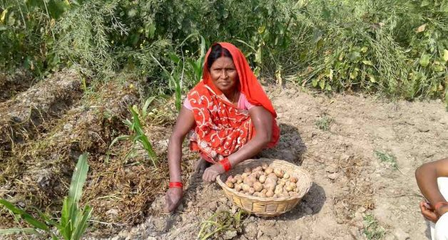 Rain or shine, women farmers of Saran district toil from dawn to dusk, growing vegetables and reaping rewards. (Photo by Mohd Imran Khan)