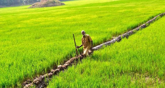Farmers reclaim fallow land to cultivate rice in Kerala