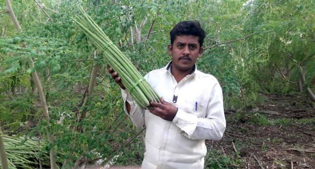 Bala Shivaji Patil of Uplai Khurd village stands with a bunch of drumsticks grown in his farm. (Photo by Hiren Kumar Bose)