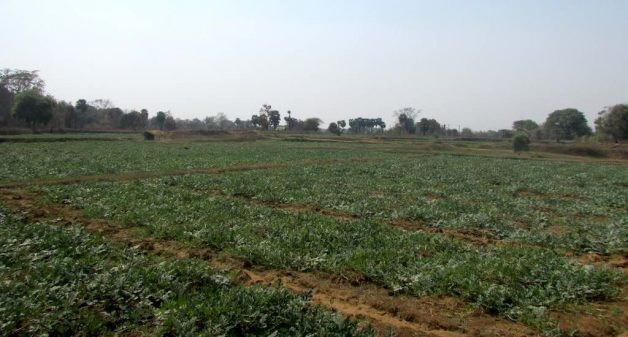 Growing watermelons has not only curbed migration but has brought about many positive changes to villages of western Odisha. (Photo by Rakhi Ghosh)