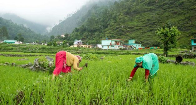 Mountain women live and work with bent backs