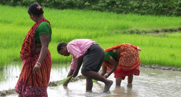 Organic farming gathers steam in the Sundarbans