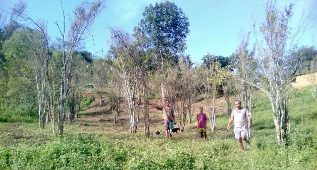 Assam farmers struggle over loss of orange orchards