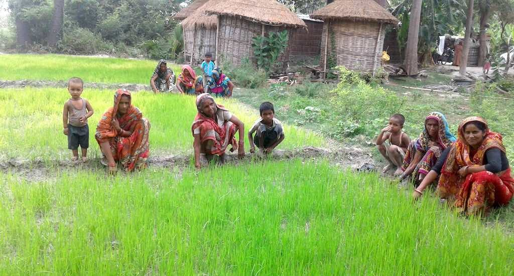 Rice bankers of Muzaffarpur hold out hope for women's empowerment