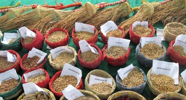 Various native seeds of rice, pulses and other crops available for sale (Photo by Moushumi Basu)