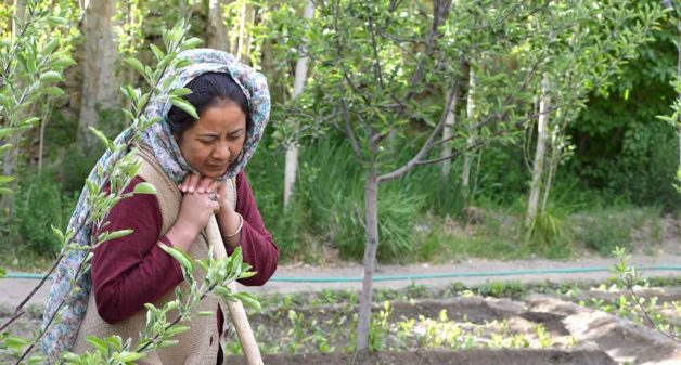 A farmer fixes her gaze on a trickle of irrigation water at her farm in Leh (Photo by Athar Parvaiz)