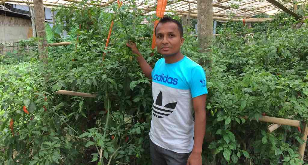Jadhav Dutta in his chilli farm (Photo by Azera Parveen Rahman)