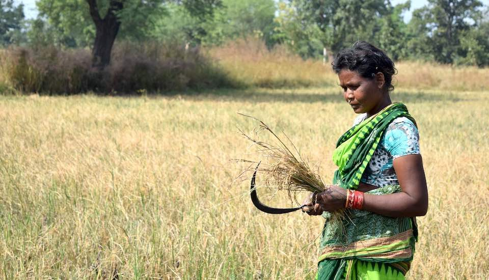 Since most women in rural Odisha do not have titles over land, they are provided no compensation by the government against crop loss (Photo by Basudev Mahapatra)