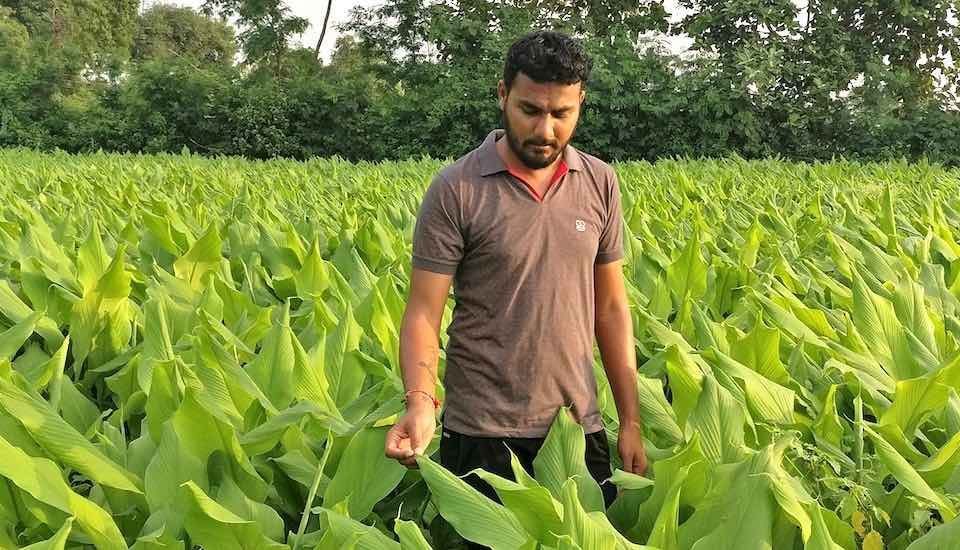 Vivek Ghumade plans to increase his turmeric acreage, as the GI tag of Waigaon turmeric is expected to increase demand (Photo by Hiren Kumar Bose)