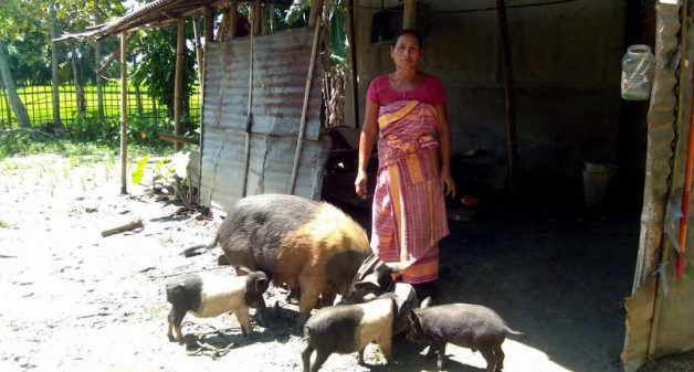 Mother of Moromi Boro has taken up backyard piggery to raise her daughter (Photo by Basudev Mahapatra)