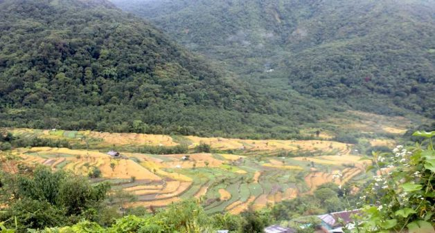 Conservation efforts by villagers have increased the tree cover and wildlife population in and around Khonoma (Photo by Ninglun Hanghal)