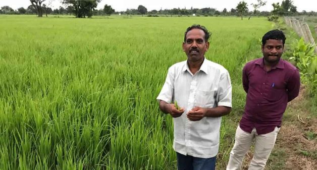Coastal farmers tackle salinity with innovative measures