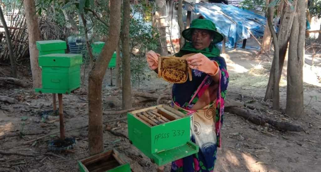 Chhattisgarh tribes taste success raising honeybees