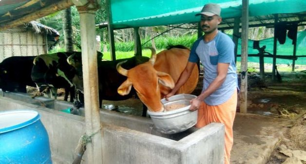 Gnanasekaran finds mesquite pod powder a good cost effective cattle feed that also helps increase milk yield (Photo courtesy Gnanasekaran)