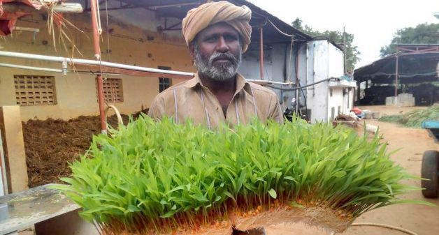 Farmer Jaikumar has been growing fodder through hydroponic system to tackle fodder shortage, especially during extreme weather conditions (Photo courtesy Jaikumar)