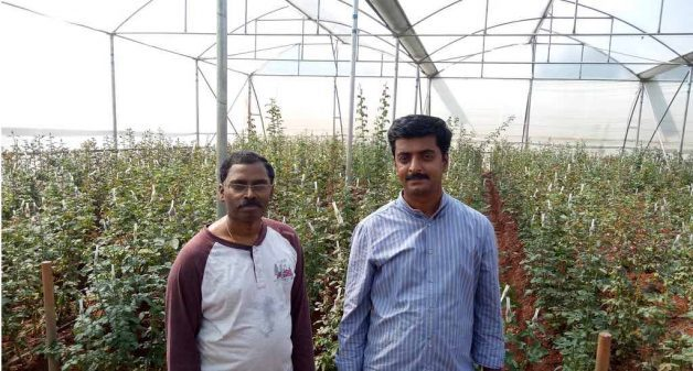 Educated youth such as Srinivasan and Sudeesh have taken up hi-tech farming, cultivating crops under controlled conditions using Israeli technology (Photo by George Rajashekaran)