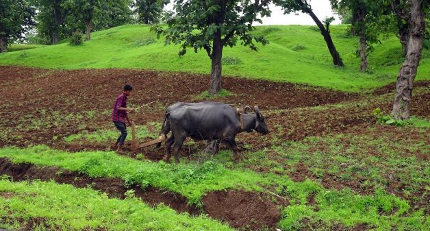 Ending India's farm crisis needs a complete change in mindset (Photo by Bishnu Sarangi)