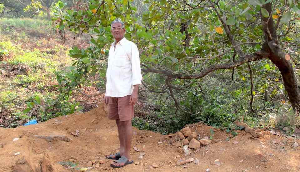 Monkeys transmit KFD virus when they descend on cashew farms. Cashew farmer Vasu Appa Gawas took six months to recuperate from monkey fever (Photo by Tarun Kanti Bose)