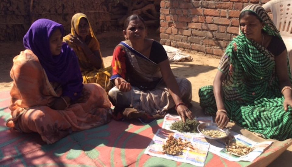 Women farmers of Aamlipara village of Banswara district in Rajasthan showcase dried seeds of traditional vegetables (Photo by Rakhee Roytalukdar)