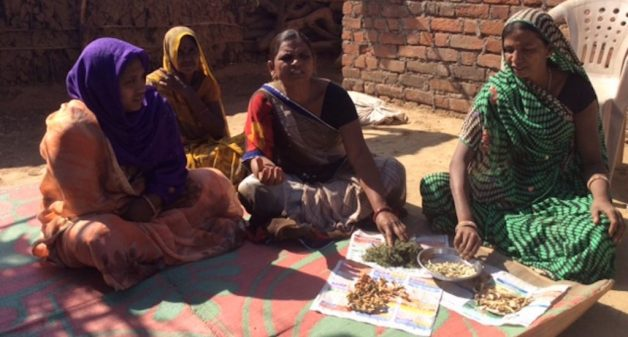Seed guardians of Banswara revive traditional varieties