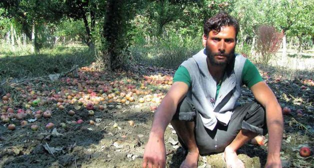 Apple growers suffering financial losses due to untimely snowfall in 2018, had suffered damages during the 2014 flooding as well (Photo by Athar Parvaiz)