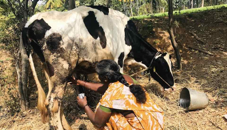 Shivamma, secretary of Stree Shakti women self-help group in Somlara village of Tumkur district who runs a milk collection sub-center, says collection has declined in the past one month due to drought (Photo by Nidhi Jamwal)