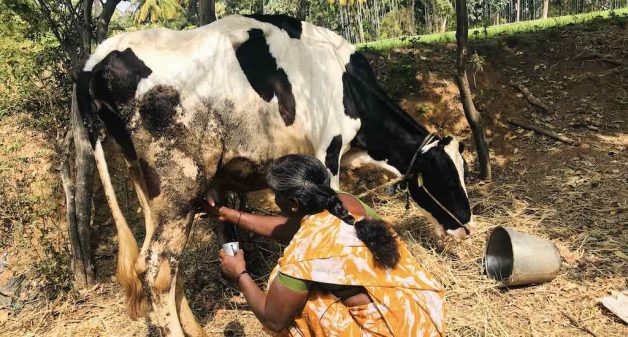 Karnataka dairy farmers face heat of drought