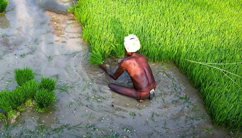 Basic income support will bring succor to farmers in times of stress (Photo by Nithi Anand)