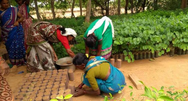 Rural women raise saplings from the seeds they conserve, to make herbal products and also to sell the saplings (Photo by Balasubramaniam N.)