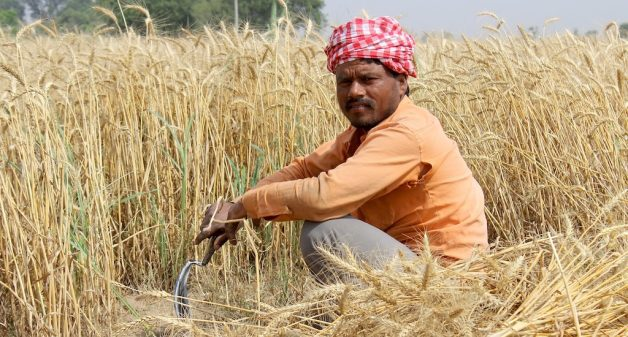 The government's income support to small farmers may not be sustainable in the long run (Photo by Jeevan Singla)