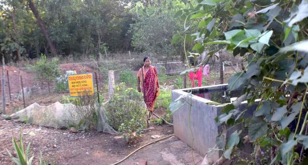 Mathura Podha of Ratanpur has added moringa and lemon to her nutrition garden to increase the number of produce (Photo by Basudev Mahapatra)