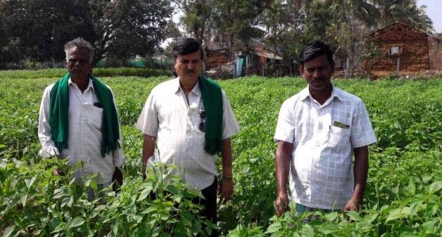 Kurubur Shantakumar, flanked by his farmer friends in a field of chia, the crop that has brought them good financial benefits (Photo by Hiren Kumar Bose)