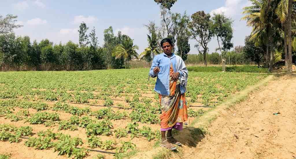Drought-hit farmers grow crops with treated wastewater