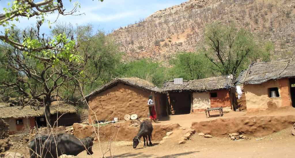 Sariska's herders fear livelihood loss with eviction