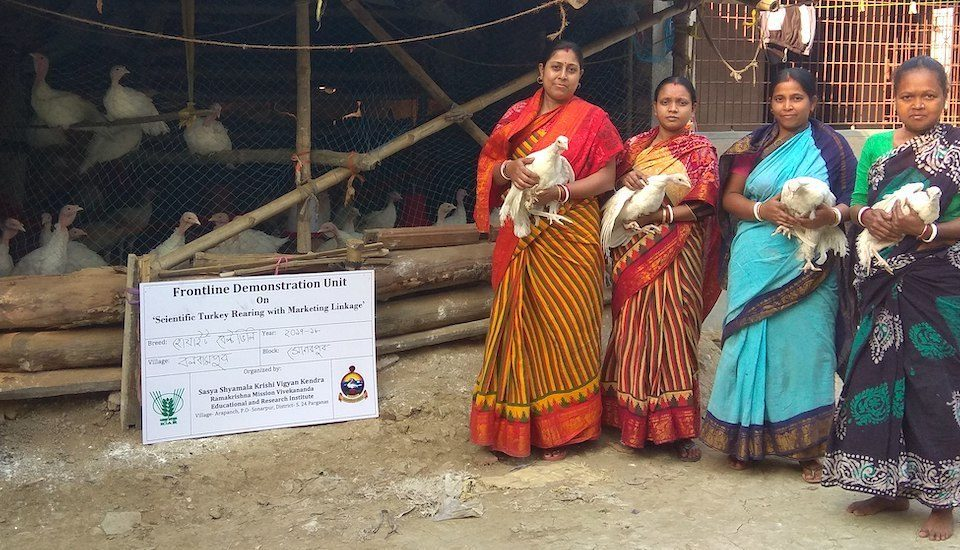 Overcoming odds, women sought help under bank linkage program and took to turkey rearing as a viable livelihood (Photo by Dhruba Das Gupta)
