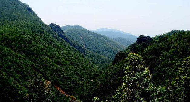 The gorge ecosystem of Mandasaru, with its mix of semi-evergreen and deciduous forests, harbors rich biodiversity (Photo by Basudev Mahapatra)