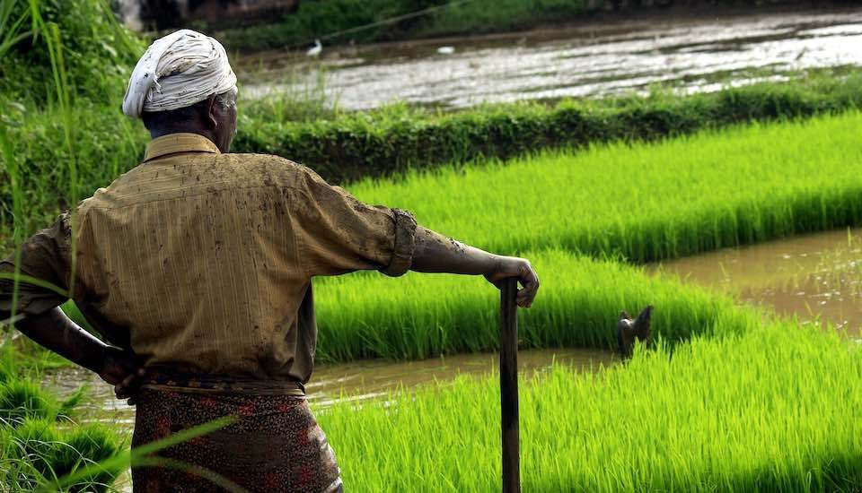 Modernizing agriculture is the need of the hour (Photo by Nandu Kumar)