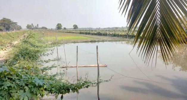 Harvesting rainwater in farm ponds and growing crops on raised ridges have helped Sundarbans farmers tackle soil salinity (Photo by Dhruba Das Gupta)