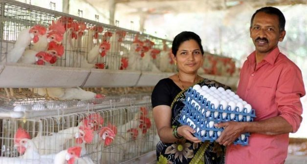 Layer poultry farming in Wados has increased the household income of farmers like Sarita and Prakash Rane, helping Sindhudurg towards self-sufficiency (Photo by Hiren Kumar Bose)