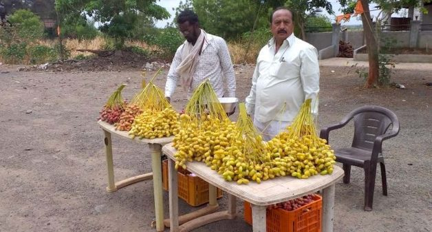 Rajendra Deshmukh, having succeeded in growing Kutch dates in Maharashtra, sells freshly harvested dates on the highway (Photo by Hiren Kumar Bose)