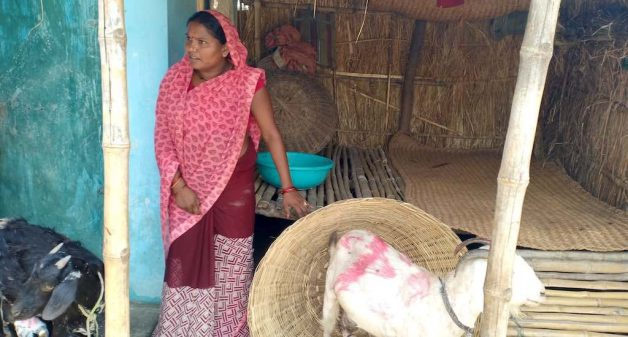 Pashu sakhis such as Phulchun Devi of Jhitkahi village help women rear goats by offering various services as para-veterinarians (Photo by AKRSPI)