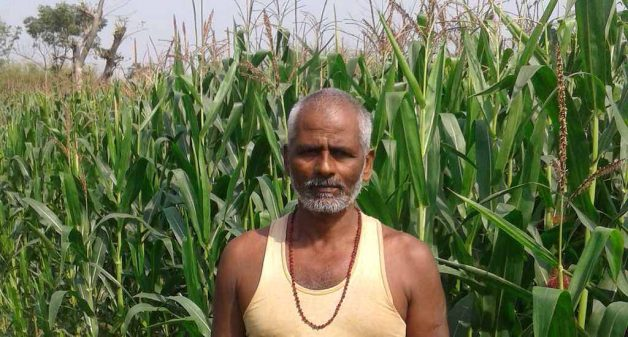 Despite rich harvests, Seemanchal region's maize farmers like Dular Mahto of Motihara village are unable to earn good revenue due to market forces (Photo by Mohd Imran Khan)