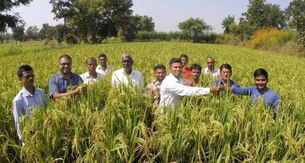 Groups of farmers visit the farm of Bhoyar (extreme right) at Gunthara to learn about the Saguna rice technique (Photo by Hiren Kumar Bose)